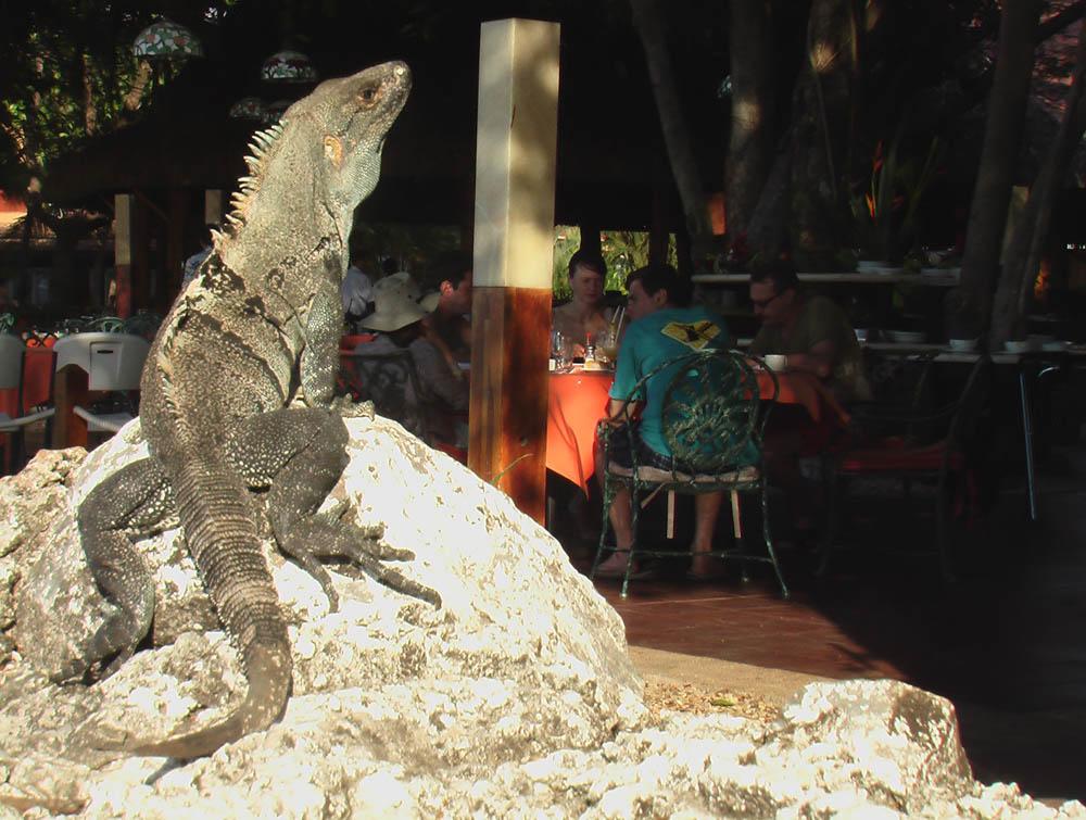 Обитатель ресторана, Коста-Рика