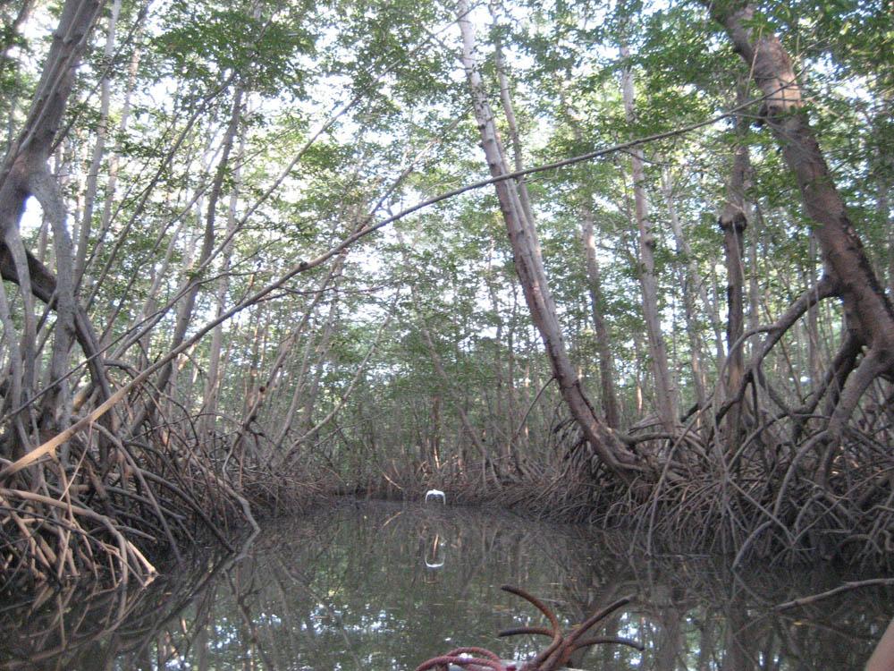 Мангровые заросли, Коста-Рика