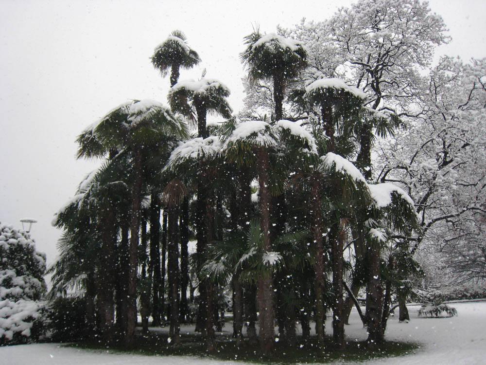 Снегопад в ботаническом саду, Лугано