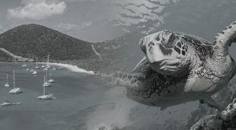 Редомициляция компании с БВО на Сейшельские острова: