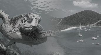 Редомицилирование компании с Сейшельских Островов на БВО: